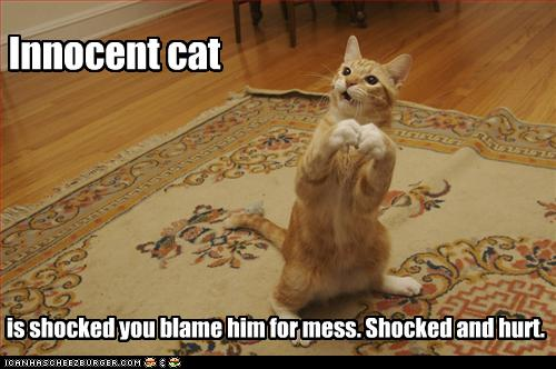 lol cat innocent